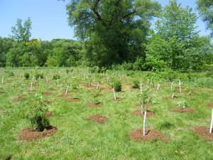 Community Planting with Bramalea SNAP Team at Knightsbridge King Cross @ Knightsbridge King Cross