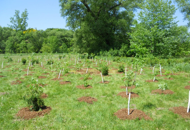 Trees recently planted