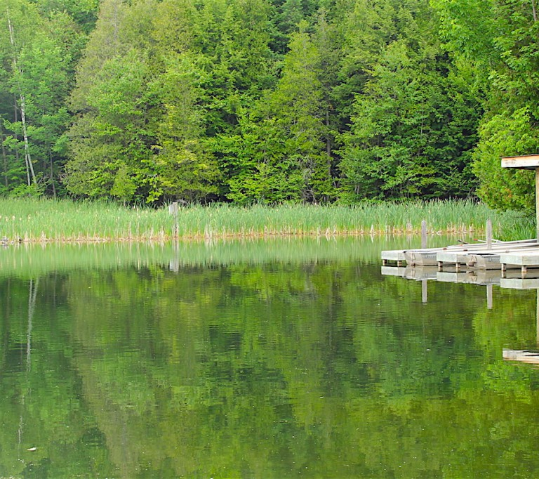 Glen Haffy Conservation Area hero image