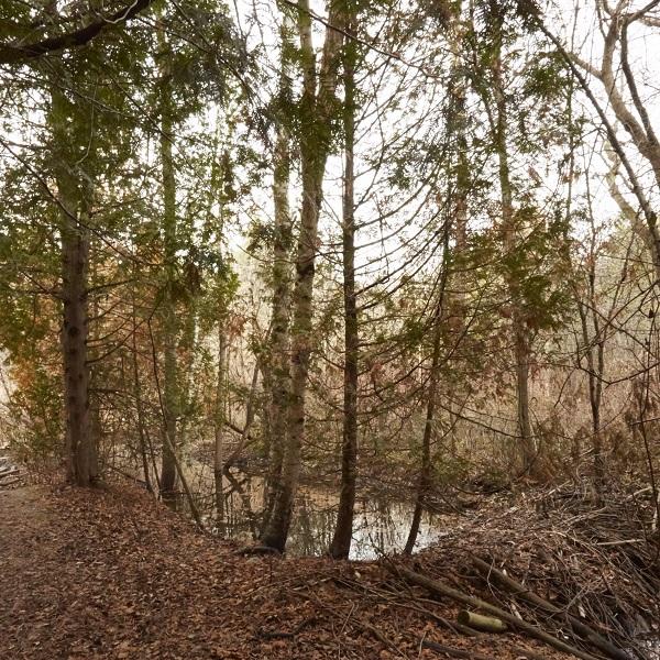 Altona forest in autumn