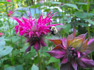 Bugs in your Backyard - Children's Garden Workshop @ Pickering Nuclear Information Centre