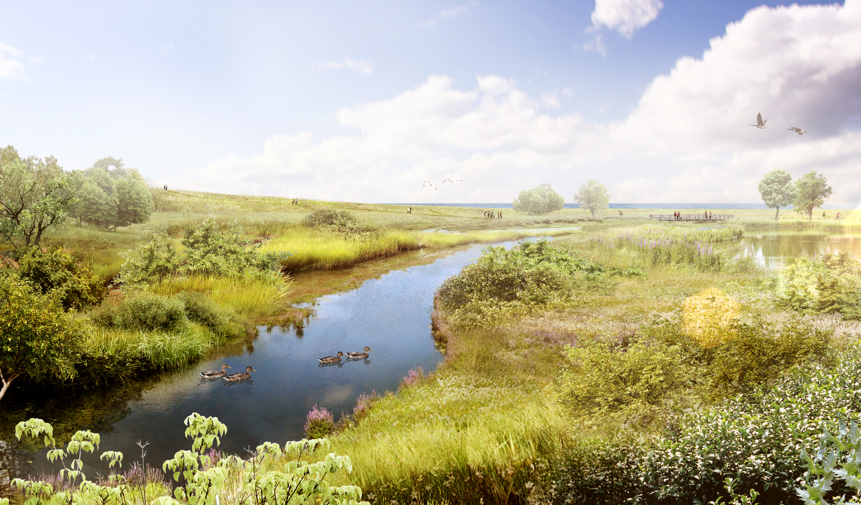 Looking south at the new Serson Creek Wetland