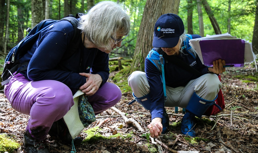 volunteers take part in TRCA terrestrial monitoring program