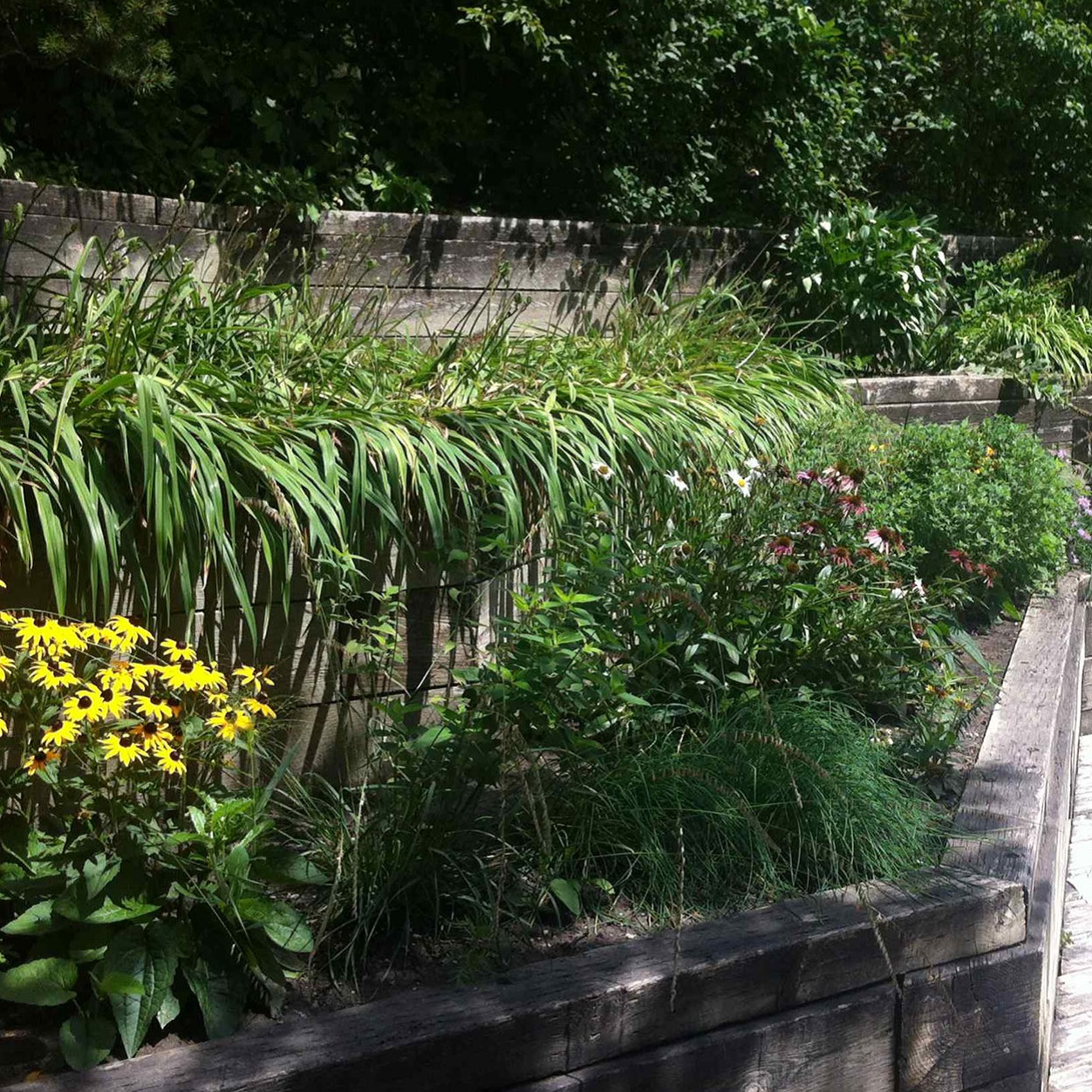 Heritage gardens at Black Creek Pioneer Village