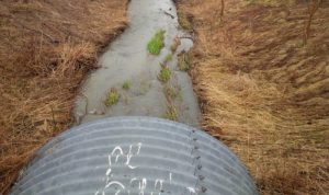 stormwater discharge into Lake Ontario