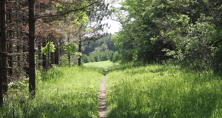 TRCA greenspace management conservation land care