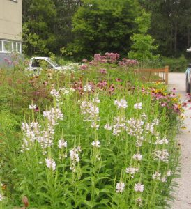 Performance of Mature Bioretention @ Online Webinar