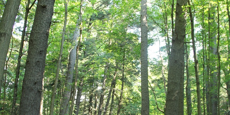 TRCA climate change forest canopy study