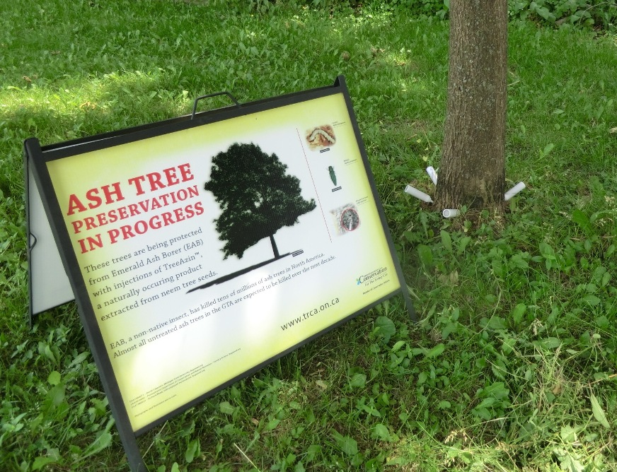Sign about treating trees for Emerald Ash Borer