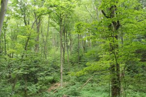 SOLD OUT! Forest Therapy Walk @ Kortright Centre for Conservation