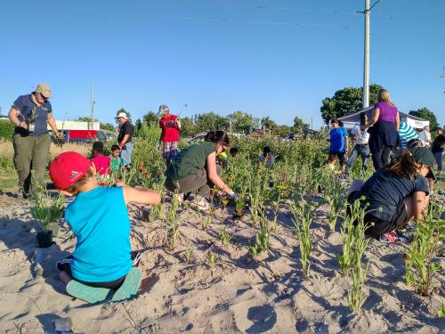 Planting wild flowers in sandy soil
