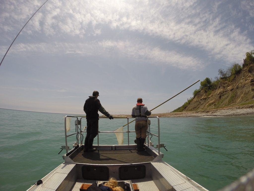 Staff electrofishing from a boat