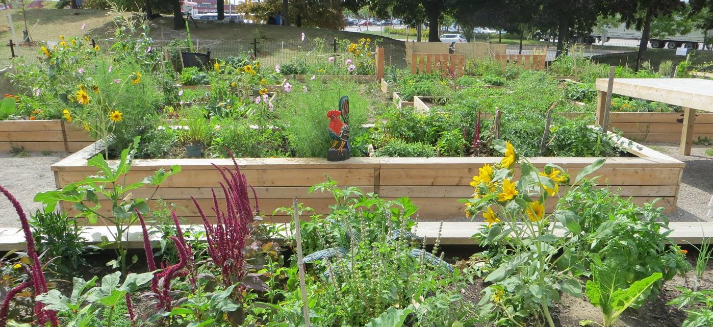 San Romanoway Community Garden after