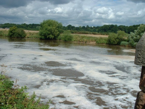 Natural foam on a river