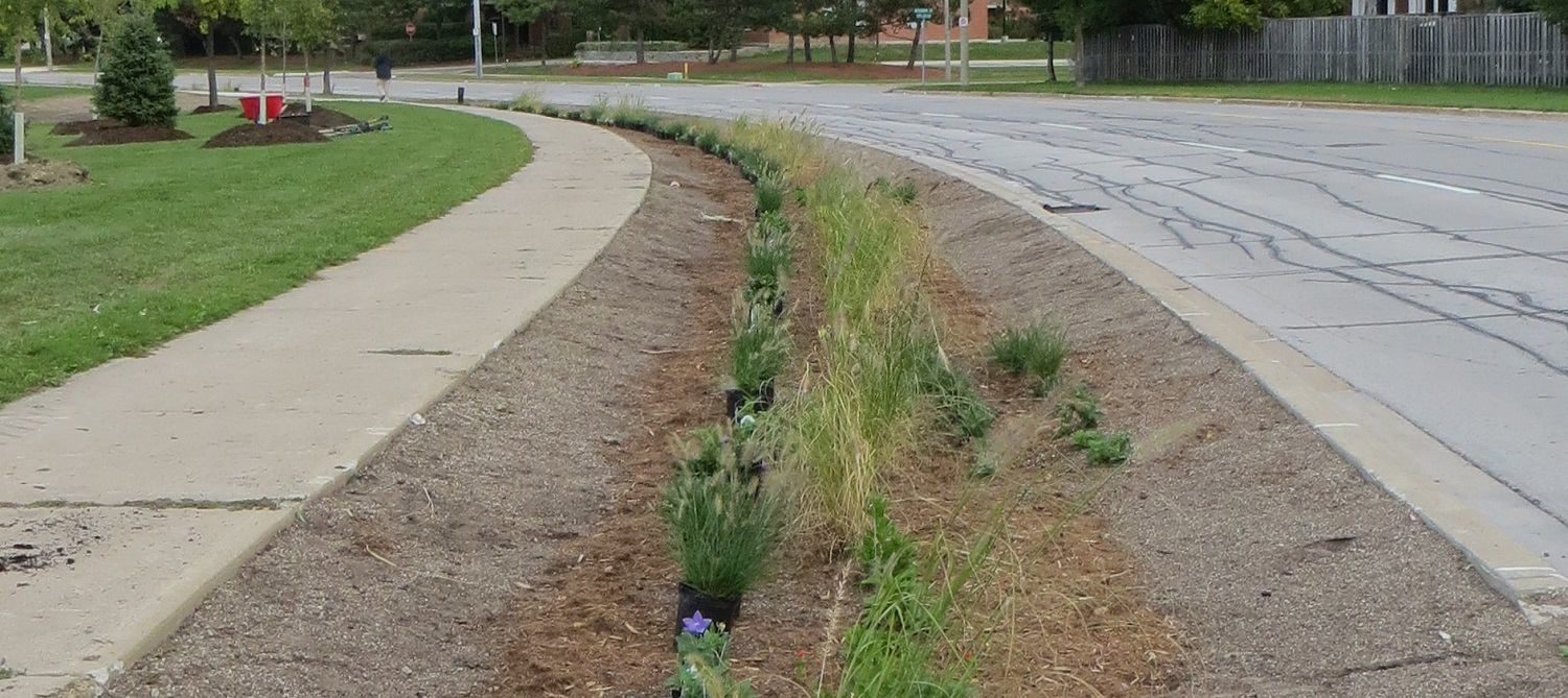 the County Court SNAP bioswale project