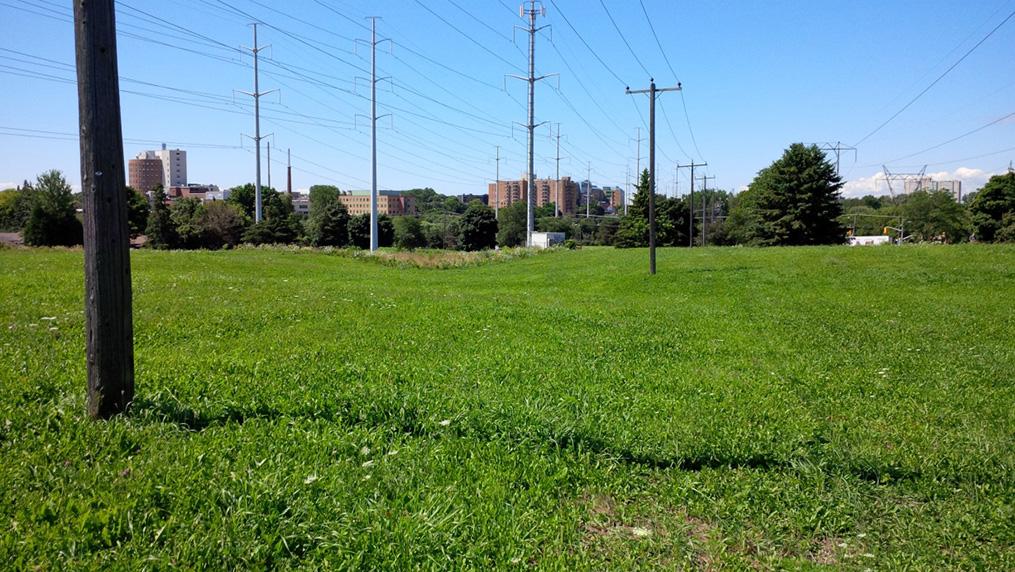 mowed turf grass