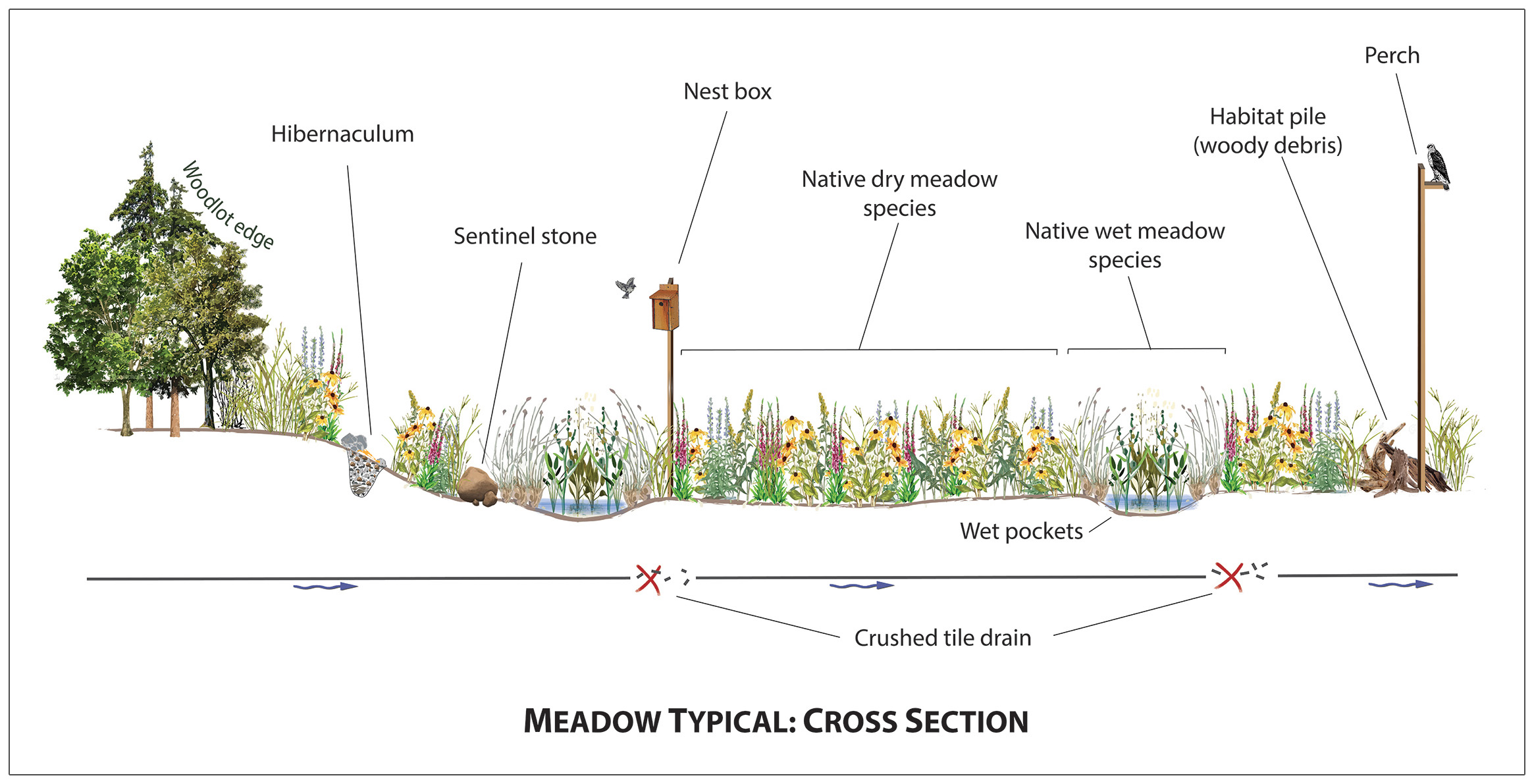 cross section of typical meadow