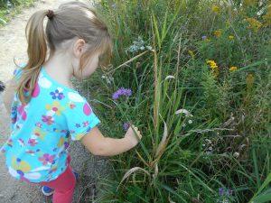 Parent and Tot Trail Walk @ Claremont Field Centre