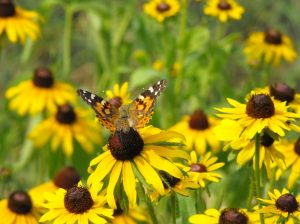 Beautiful Native Plants @ Online Webinar - General Audience