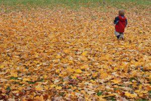 A Stroll In Nature @ Brampton, Malton and Caledon | Brampton | Ontario | Canada
