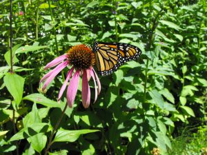 Gardening for Bees, Butterflies and Beyond @ Don Beer Arena
