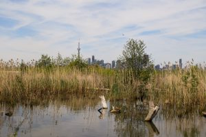 Wetland Walk at Tommy Thompson Park @ Tommy Thompson Park Nature Centre