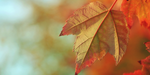 Life of a Tree @ Online webinar