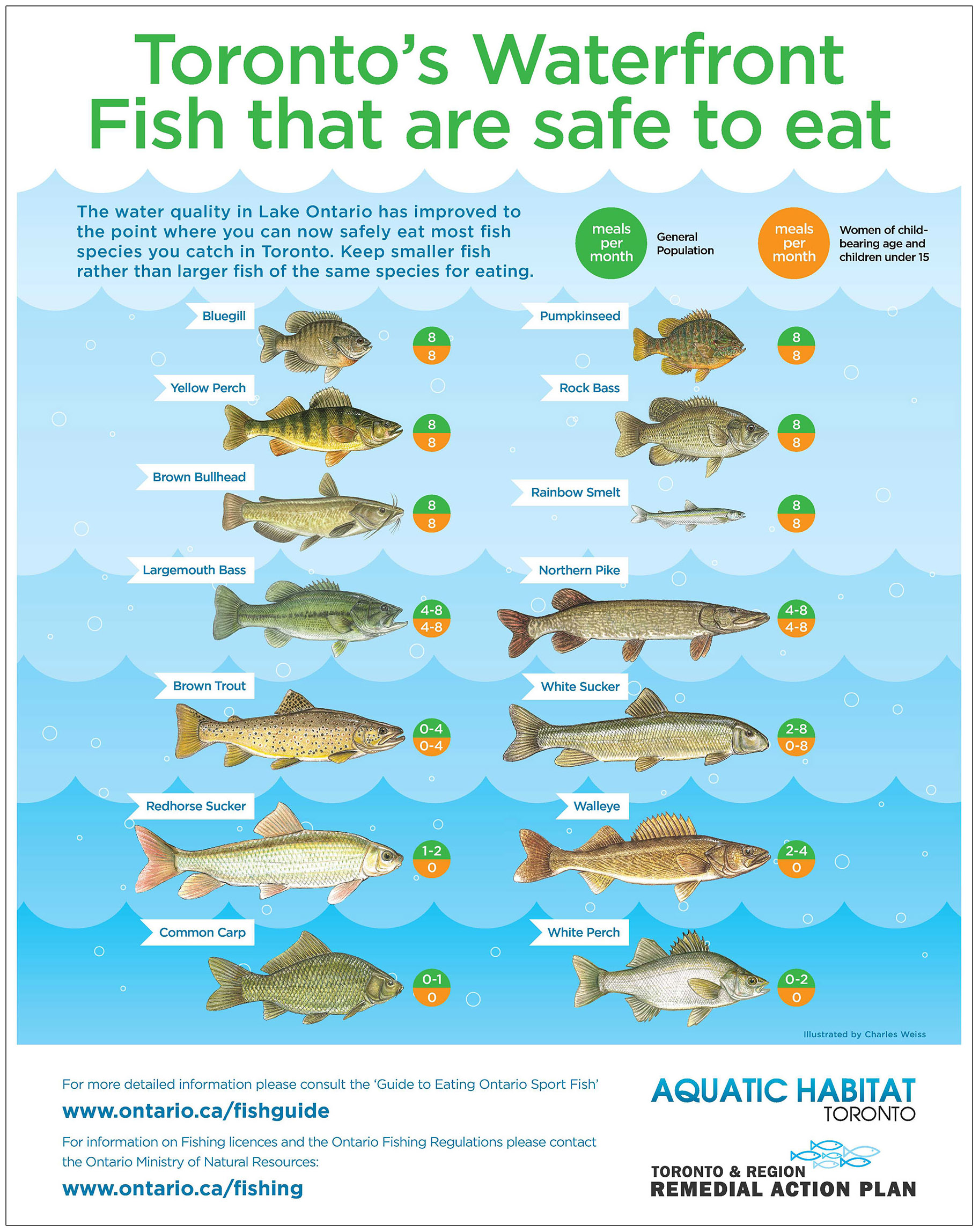 guide to fish from the Toronto waterfront that are safe to eat