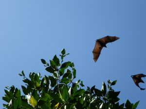 All About Bats in Caledon @ Dicks Dam Park