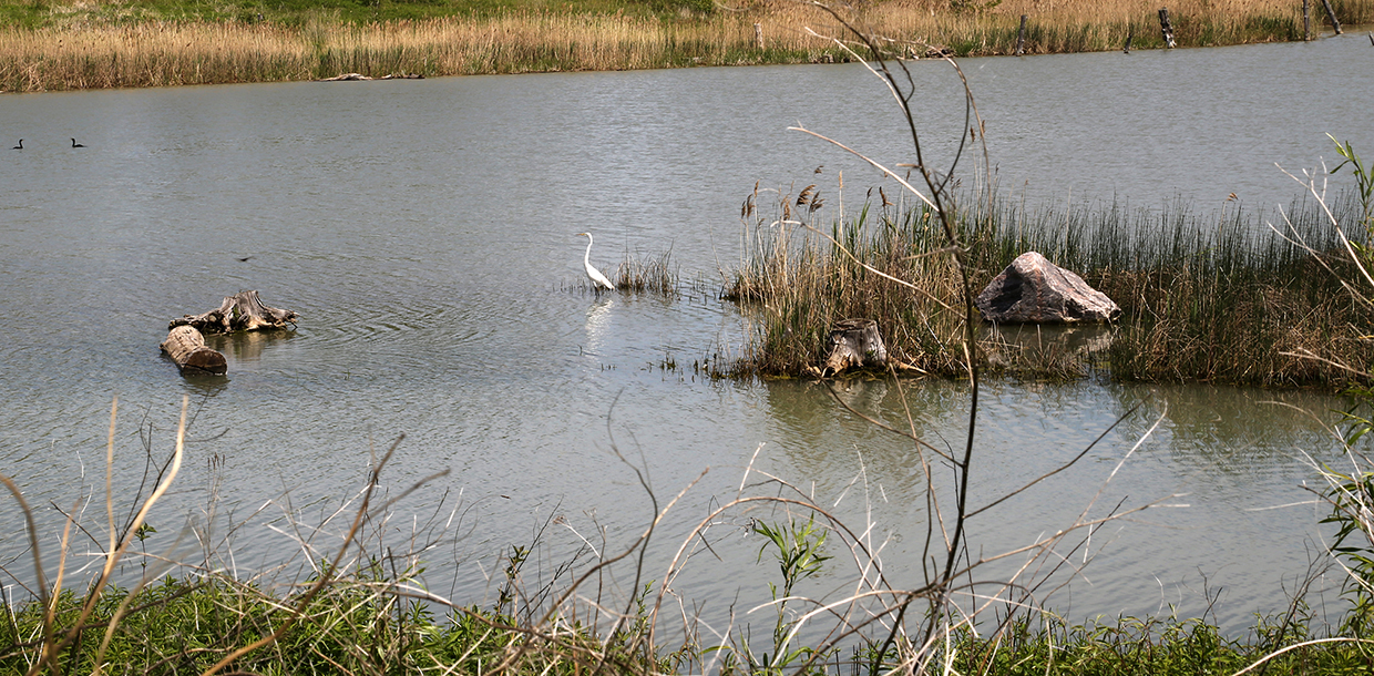 birds in wetland area at Tommy Thompson Park