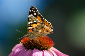 Workshop: Butterflies of Ontario @ Kortright Centre for Conservation