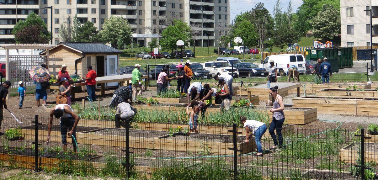 San Romanoway Tower residents work in community garden