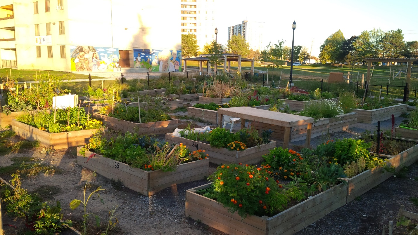 community garden in the Black Creek SNAP neighbourhood