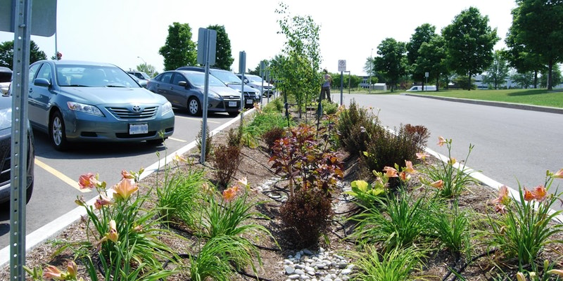Low Impact Development, bioswale, rain garden