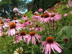 Beautiful Native Plants: Less Work, Less Water @ Online Webinar - General Audience