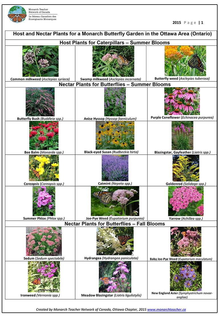 Butterfly garden plants chart