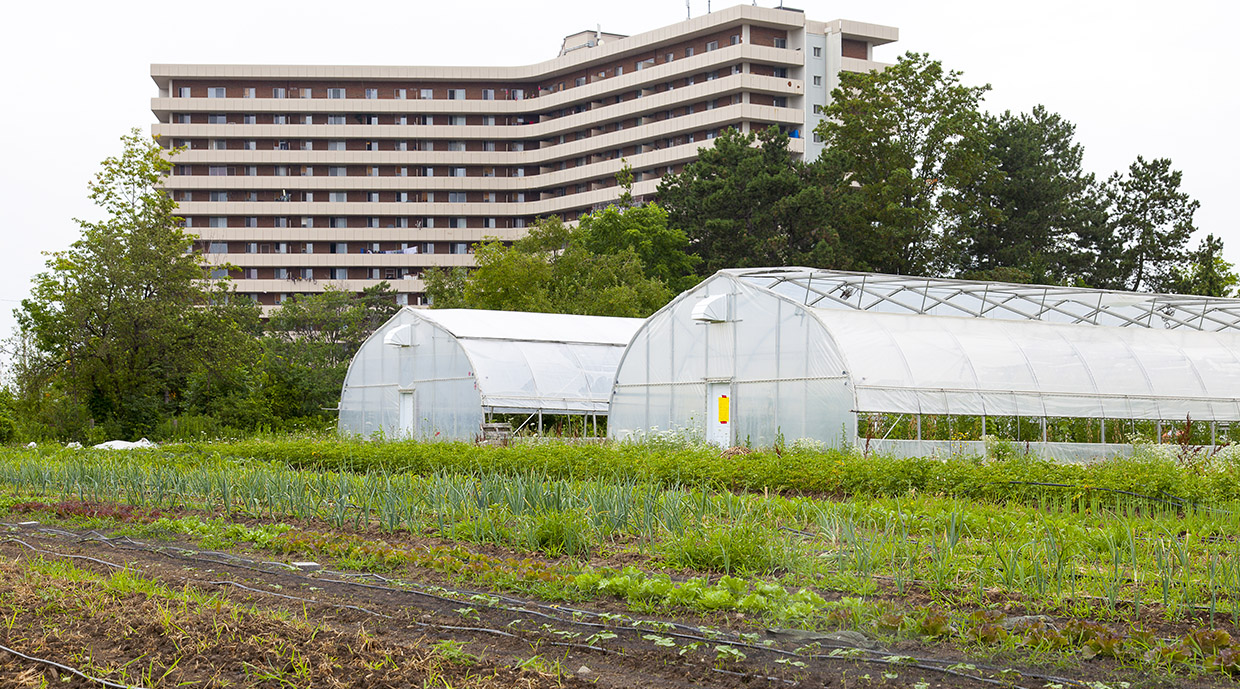 Urban Agriculture - Toronto and Region Conservation Authority (TRCA)