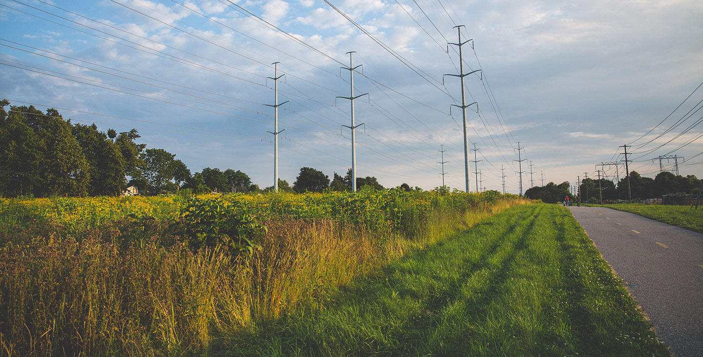 The Meadoway in full bloom under hydro towers