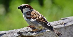 Workshop: Sparrows @ Kortright Centre for Conservation