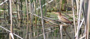 Bird Walk @ Tommy Thompson Park