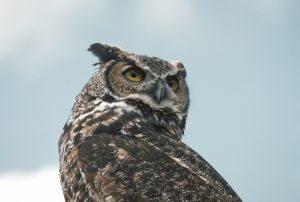 Hoot and Howl at Cold Creek @ Cold Creek Conservation Area   Nobleton   Ontario   Canada