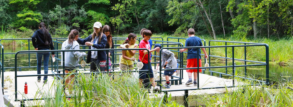 children explore wetland during Kortright summer nature day camp