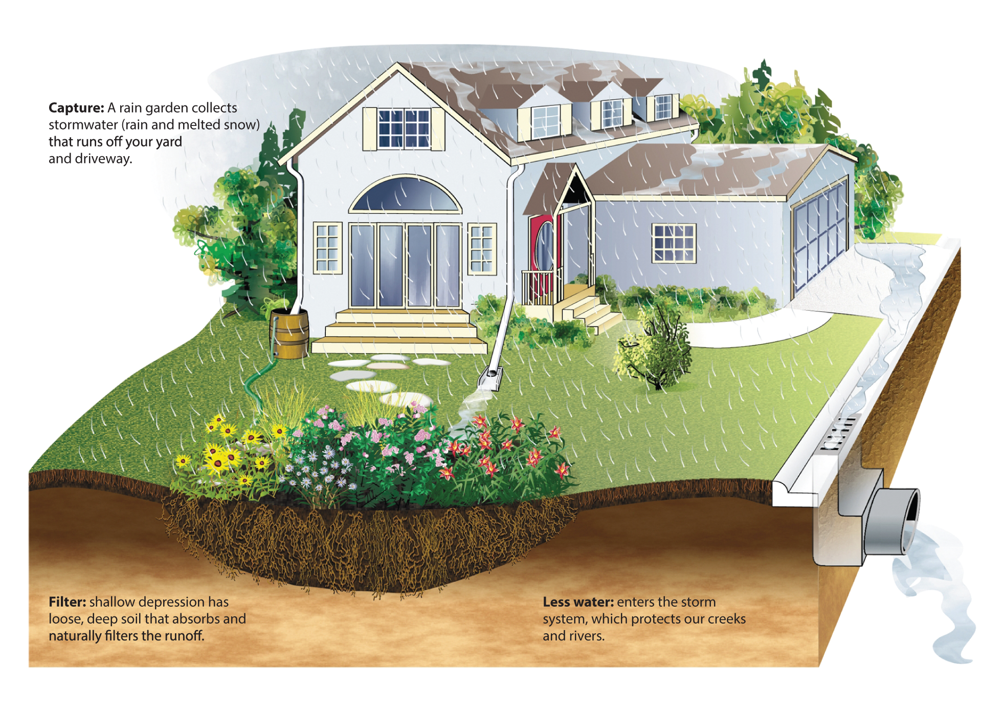 A complete guide to building and maintaining a rain garden ...