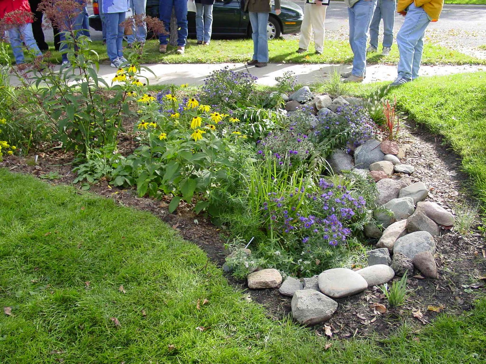 A rain garden in the front yard