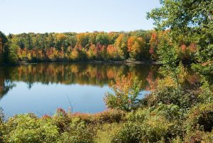 Fall Colours Walk at Oak Ridges Corridor @ Oak Ridges Corridor, Old Colony Road trailhead