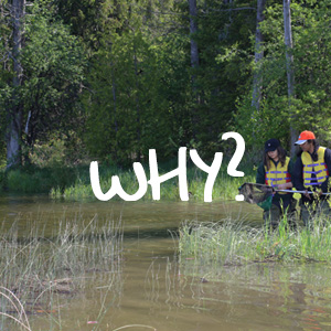 teenage girls collect aquatic wildlife samples at Lake St George Field Centre