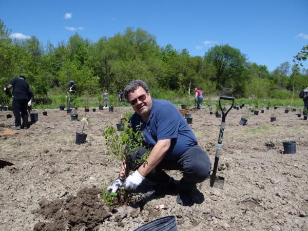 Volunteer planting a shrub