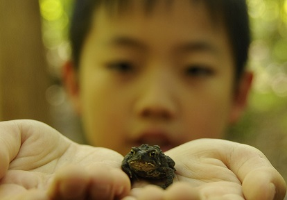 boy holds small frog at Claremont Nature Centre