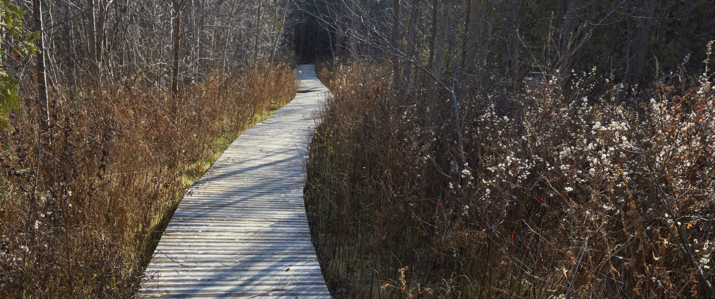 boardwalk trail in Altona Forest