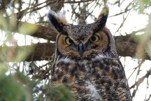 Hoot and Howl (Waitlist) @ Albion Hills Field Centre